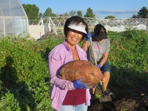 Volunteer Sunki Armas with a sweet potato that will feed a large family